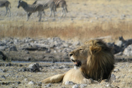 Day 14: Etosha National Park