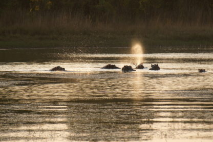 Day 15: Okavango River to Maun