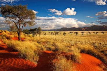 Namibia and Botswana Adventure: 22 May - 13 June