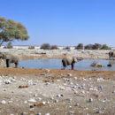 Day 1: Windhoek to Etosha