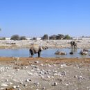 Day 12: Etosha National Park