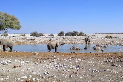 Day 12: Etosha National Park