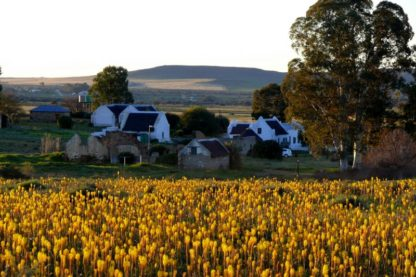 Day 1: Cape Town to Nieuwoudville
