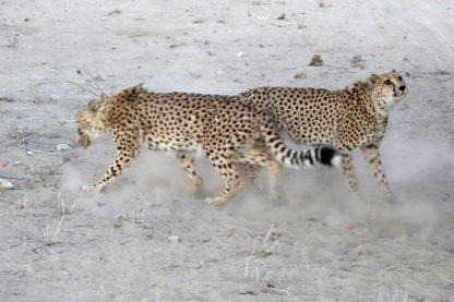 Day 11: Spitzkoppe to Etosha National Park