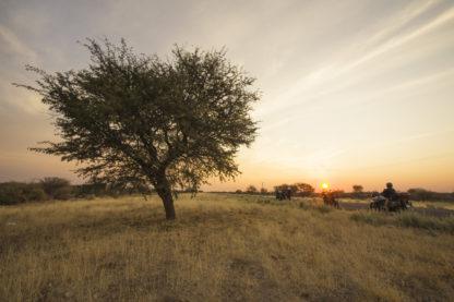 Day 17: Okavango to Dqae Qare San Lodge