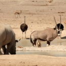 Day 2: Etosha National Park