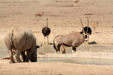 Day 2: Etosha National Park