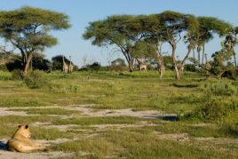 Day 16: Okavango Delta