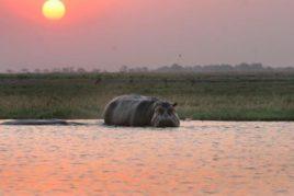 Zambezi River, Chobe and Kasane